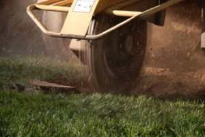 Stump Grinding in Rockford, Small Tree Removal in Rockford, Mulch Delivery in Rockford, Tree Stump Removal in Rockford