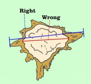 How to measure a stump to determine the cost of stump grinding