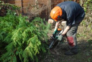 Small Tree & Shrub Removal
