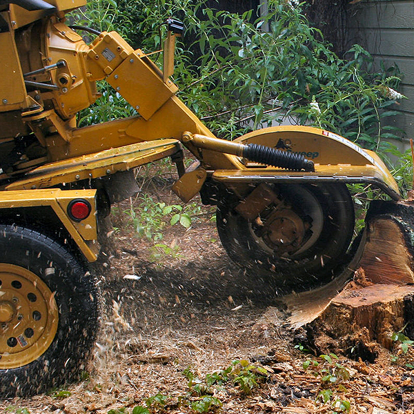 Rockford Stump Grinding Amp Tree Removal Stump Grinding